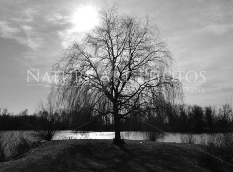Baum am See in schwarz-weiß - Nature Art Photos by Damian Konietzny